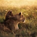 [Tuto] Retrouver les fonds d'écran caché sur Mountain Lion